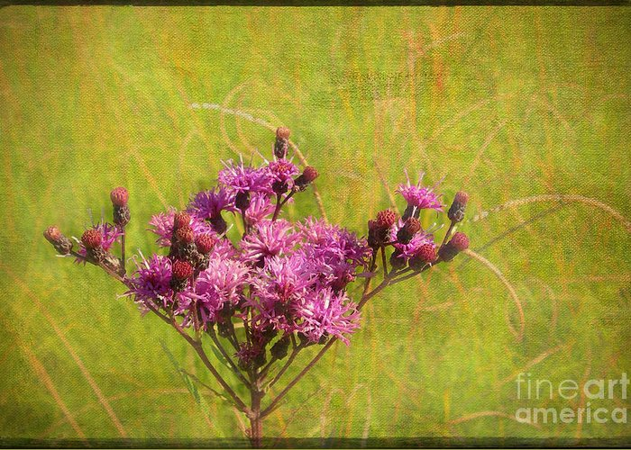Purple Greeting Card featuring the photograph Ironweed In Autumn by Judi Bagwell