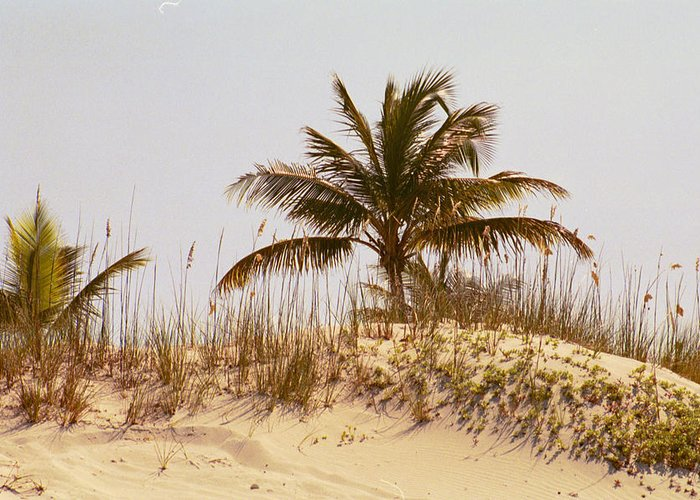 Beach Greeting Card featuring the photograph Island Sand Dune by Carol Steele