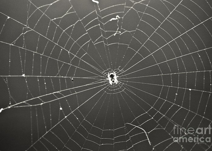 Spider Greeting Card featuring the photograph Itsy Bitsy Spider by Leslie Leda