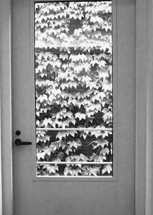 Ivy Greeting Card featuring the photograph Ivy Door by Anna Villarreal Garbis