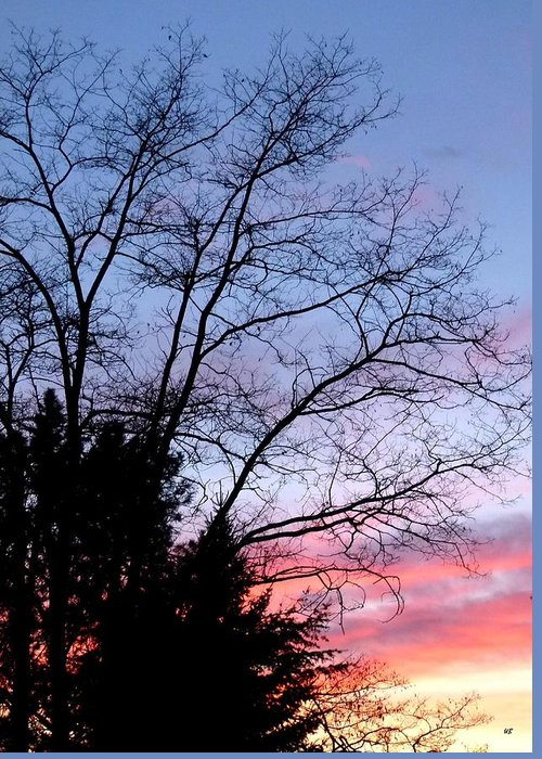 January Greeting Card featuring the photograph January Silhouette by Will Borden
