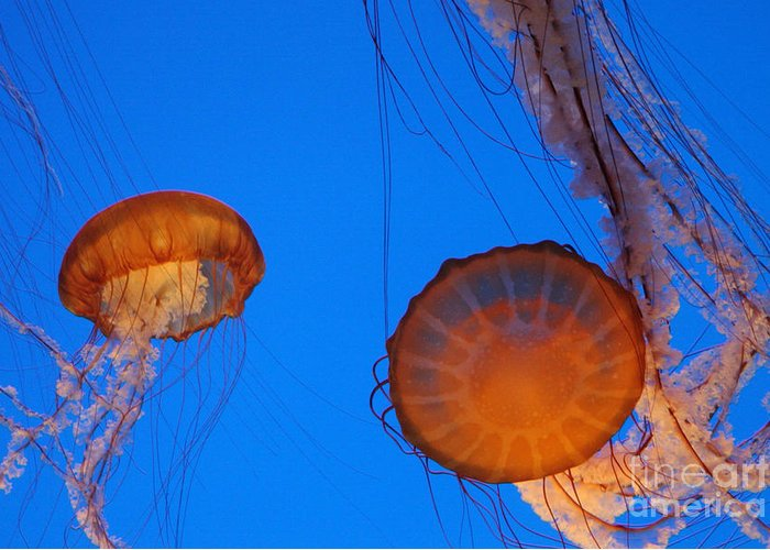 Jellies Greeting Card featuring the photograph Jellies by Tap On Photo