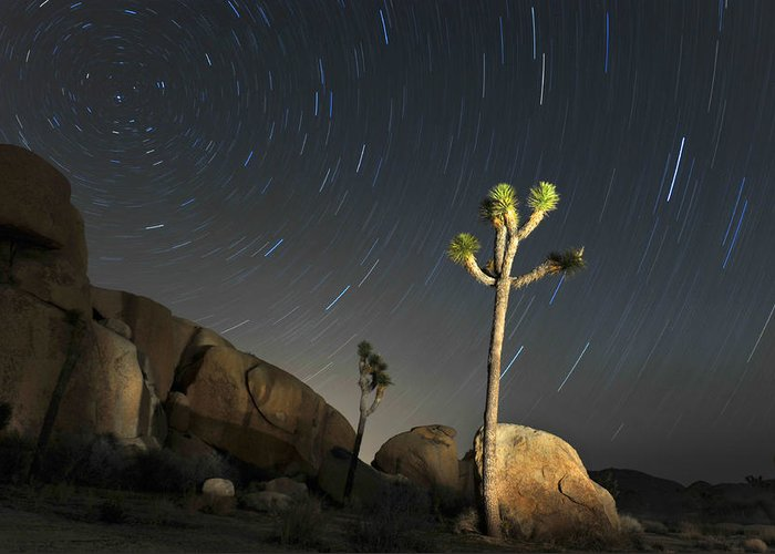 Desert Greeting Card featuring the photograph Joshua Tree Star Trails by Dung Ma
