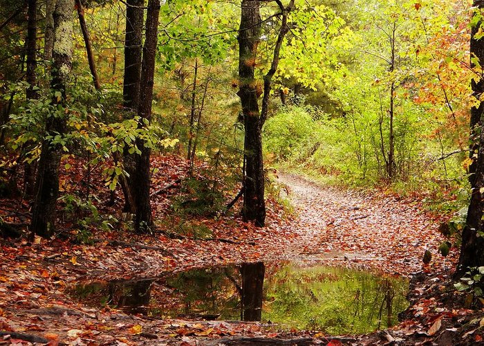 Josie's Brook Greeting Card featuring the photograph Josie's Brook Trail by Tim Canwell