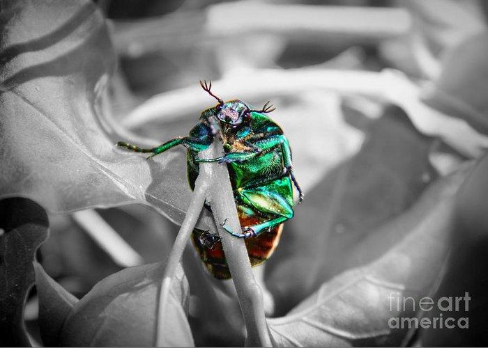 Junebug Greeting Card featuring the photograph Junebug by Mariola Bitner