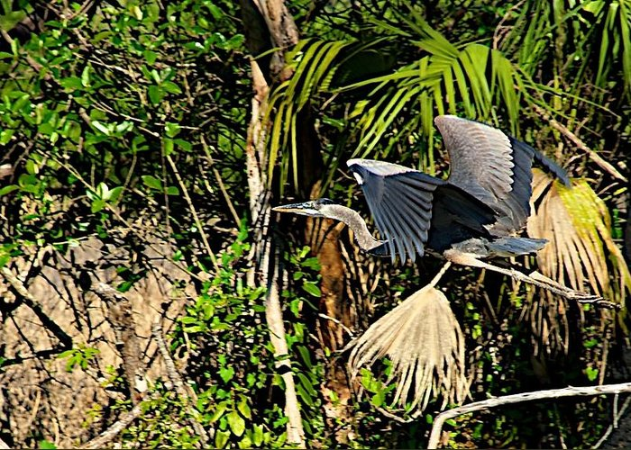 Bird In Flight Greeting Card featuring the photograph Jungle Flight by Joseph Yarbrough