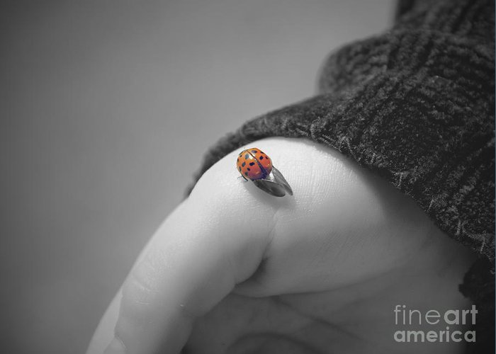 Ladybug Greeting Card featuring the photograph Just For A Moment by Aimelle