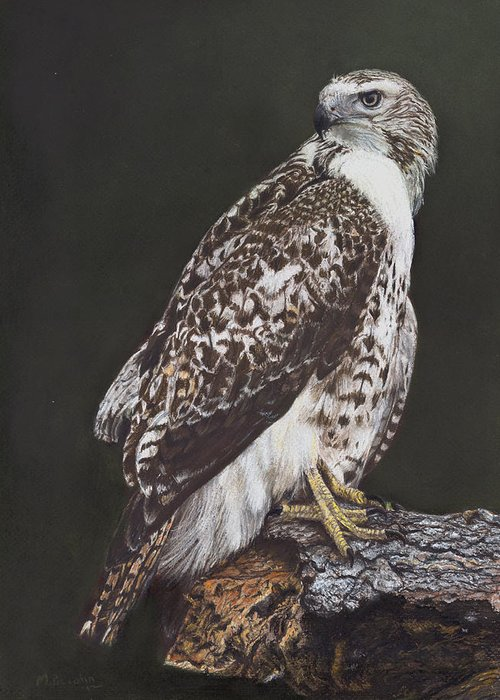 Hawk Greeting Card featuring the pastel Juvenile Red-Tailed Hawk by Marlene Piccolin