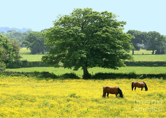 Scenic Greeting Card featuring the photograph Knee High In Buttercups by Susan Wall