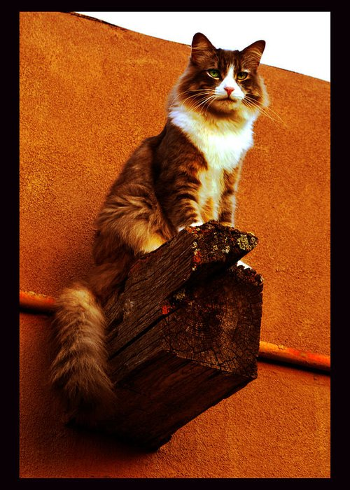 Cat Portrait Greeting Card featuring the photograph Kobe On Viga by Susanne Still