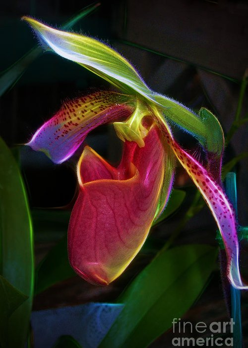 Paphipedelium Greeting Card featuring the photograph Lady's Slipper by Judi Bagwell