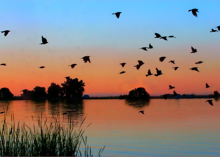 Sunset Greeting Card featuring the photograph Lake Sunset by JL Creative Captures