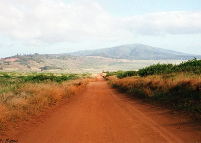 Lanai Photographs Greeting Card featuring the photograph Lanai Road by C Sitton