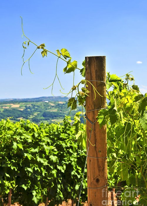 Vineyard Greeting Card featuring the photograph Landscape With Vineyard by Elena Elisseeva
