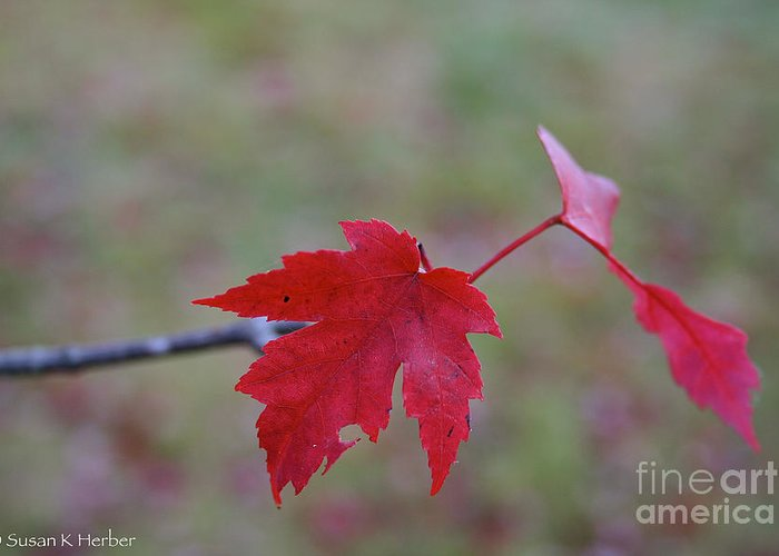 Outdoors Greeting Card featuring the photograph Last Leaves by Susan Herber