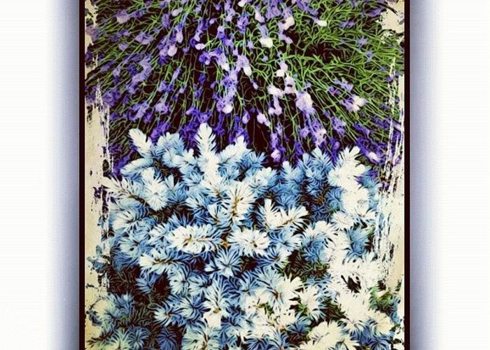 Lavender Greeting Cards
