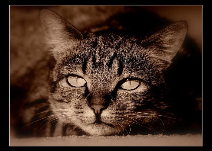 Cat Greeting Card featuring the photograph lazy Lucy by Helen Ahlers