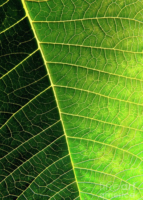 Abstract Greeting Card featuring the photograph Leaf Texture by Carlos Caetano