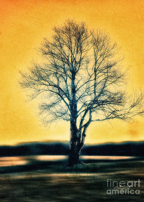 Photo Greeting Card featuring the photograph Leafless Tree by Jutta Maria Pusl