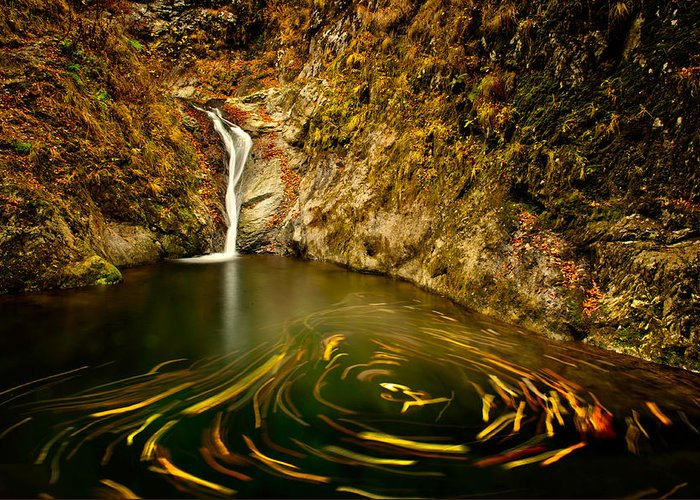 Water Greeting Card featuring the photograph Leafs Dance by Irinel Cirlanaru