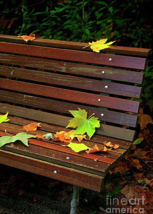 Autumn Greeting Card featuring the photograph Leafs In Bench by Carlos Caetano