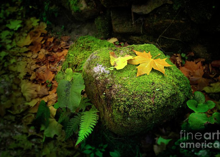 Autumn Greeting Card featuring the photograph Leafs On Rock by Carlos Caetano