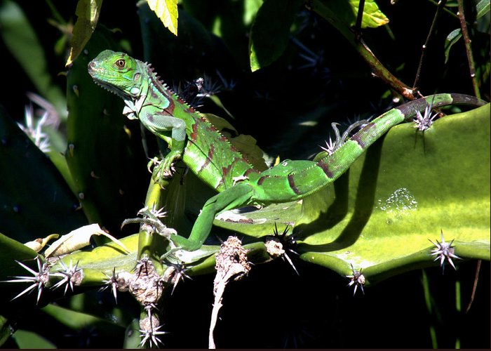 Lizards Greeting Card featuring the photograph Leapin Lizards by Karen Wiles