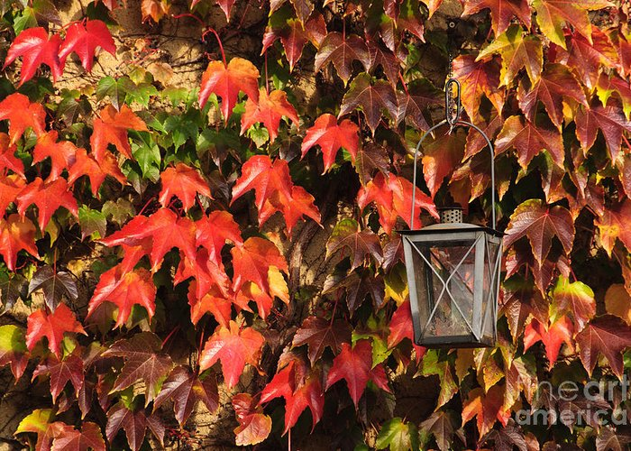 Autumn Greeting Card featuring the photograph Leaves And Lantern by Katja Zuske