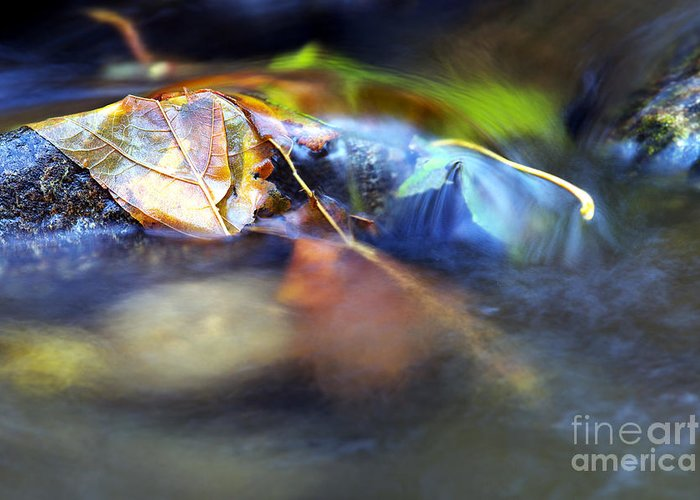 Leaves On Rock Greeting Card featuring the photograph Leaves On Rock In Stream by Sharon Talson