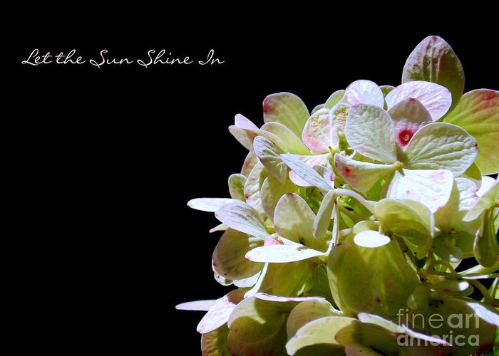 Floral Greeting Card featuring the photograph Let The Sun Shine In by Linda Galok