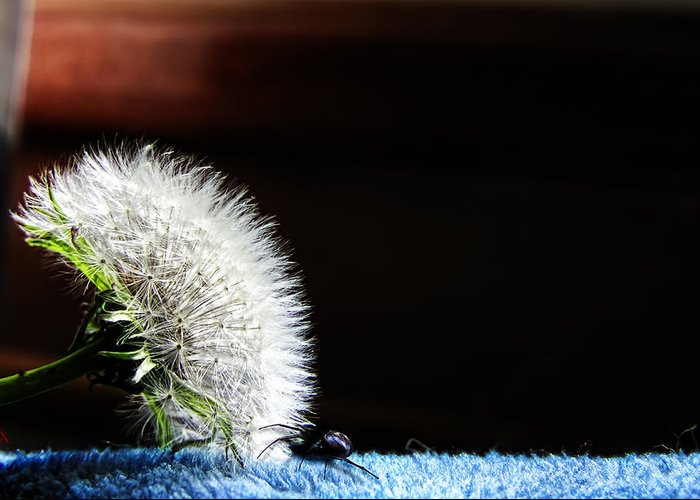 Dandelion Greeting Card featuring the photograph Let's Investigate by Adam Vance