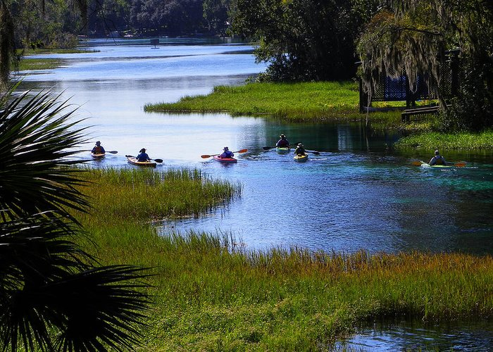 Nature Greeting Card featuring the photograph Let's Kayak by Judy Wanamaker