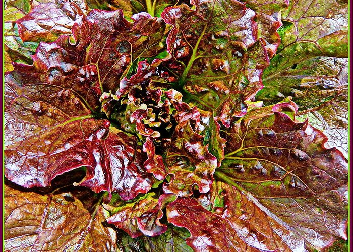 Vegetable Greeting Card featuring the painting Lettuce by Mindy Newman