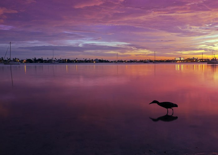 Lights Greeting Card featuring the photograph Life After Sunset by Melanie Viola