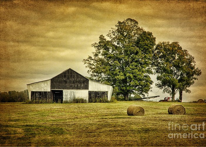 Barn Greeting Card featuring the photograph Life On The Farm by Cheryl Davis