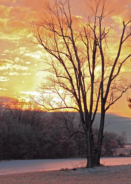 Cold Winter Day Greeting Card featuring the photograph Lighten Up The Sty by Mike Flake