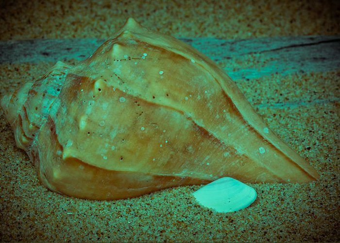 America Greeting Card featuring the photograph Lightning Whelk by David Hahn