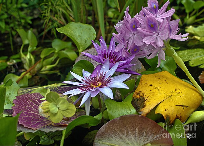 Exotic Cluster Of Water Lilies Greeting Card featuring the photograph Lilies No. 39 by Anne Klar
