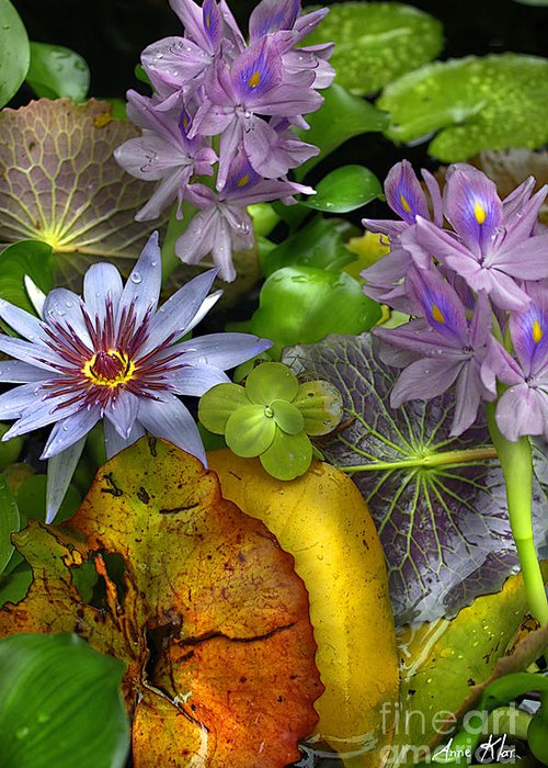 Exotic Greeting Card featuring the photograph Lillies No. 6 by Anne Klar