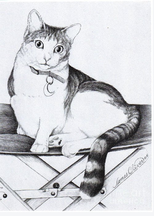 Cat Greeting Card featuring the drawing Lilly by James Oliver