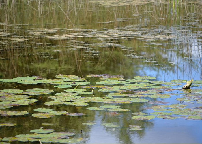 Plants Greeting Card featuring the photograph Lily Pads by Jennifer King