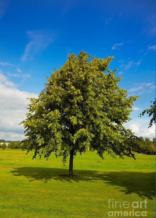 Beautiful Greeting Card featuring the photograph Lime Tree In Summer by Gabriela Insuratelu