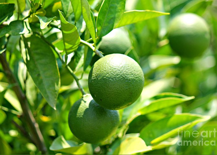 Lime Greeting Card featuring the photograph Limes by Tiffany Lane Photography
