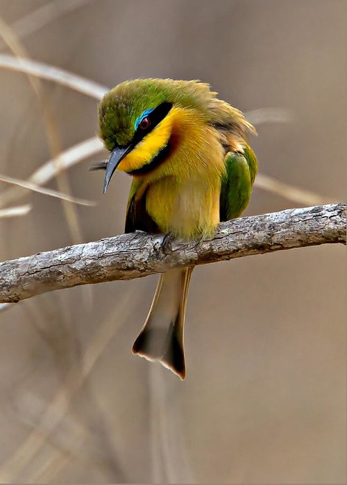 Bird Greeting Card featuring the photograph Little Bee Eater by Michael Moss
