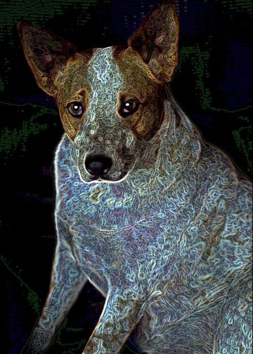 Austalian Cattle Dog Greeting Card featuring the photograph Little Blue by One Rude Dawg Orcutt