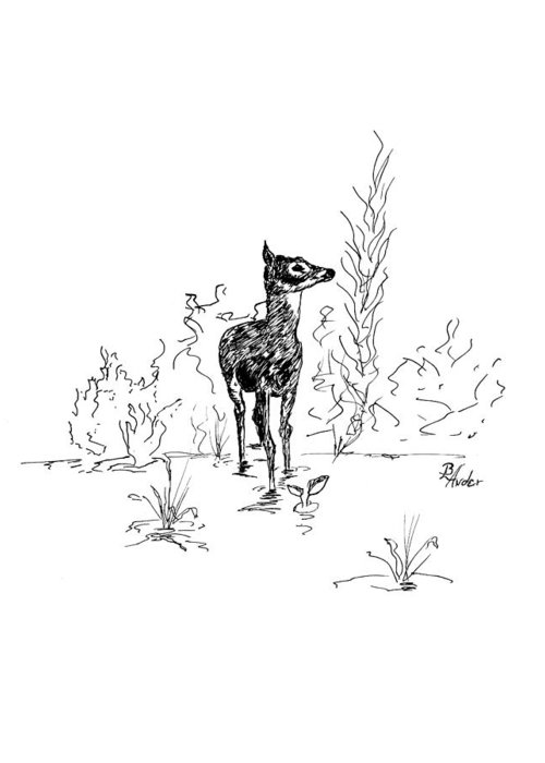 Fawn Greeting Card featuring the drawing Little Fawn by Brent Ander
