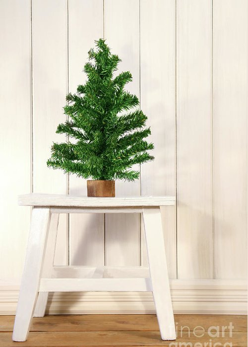 Bright Greeting Card featuring the photograph Little Green Fir Tree by Sandra Cunningham