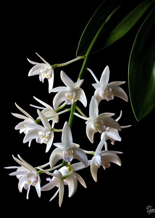 Flower Greeting Card featuring the photograph Little White Orchids by Endre Balogh