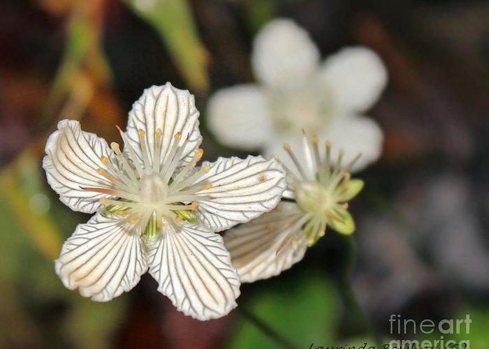 Flower Greeting Card featuring the photograph Little Wildflower by Laurinda Bowling