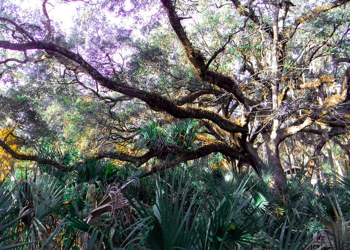 Tree Greeting Card featuring the photograph Live Oak by Christy Usilton